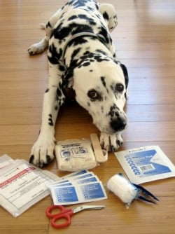 Create Your Own Canine First Aid Kit