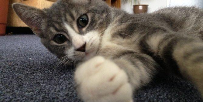 Reduce Your Animal Companion's 'Carbon Pawprint'