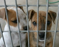 A Dog Crate Is a Cage Is a Prison