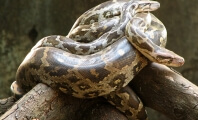 People Will Decapitate Snakes in Florida, Compete for Prize