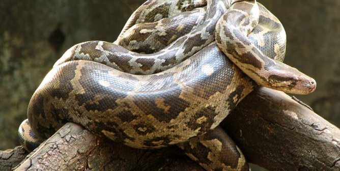 5 Reasons NEVER to Buy a Snake | PETA