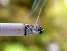 Smoking Endangers Animals Too