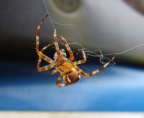 spiderbuildingweb.jpg