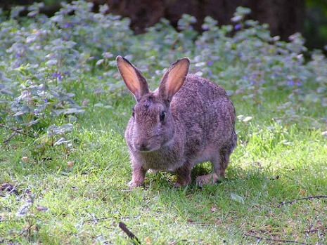 Celebrate the Year of the Rabbit