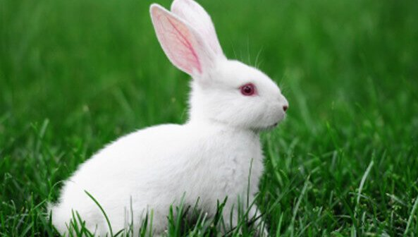 Featured Cruelty-Free Company: John Paul Mitchell Systems