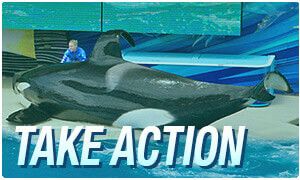 Take Action Orca
