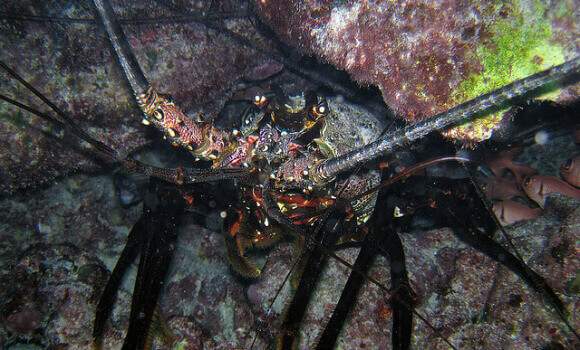15 Facts Lobsters Everywhere Want You to Know | PETA