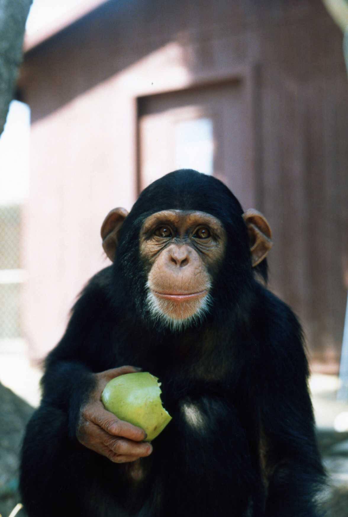 35 Things That Aren't Happening Today Because of PETA | PETA