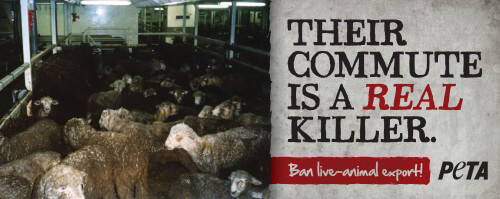 Killer Commute Ban Live Export