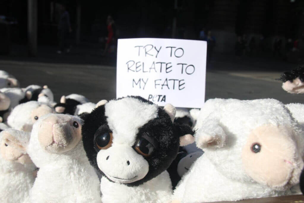 Live Export Stuffed Animals