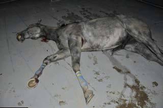 Luck Dead Horse