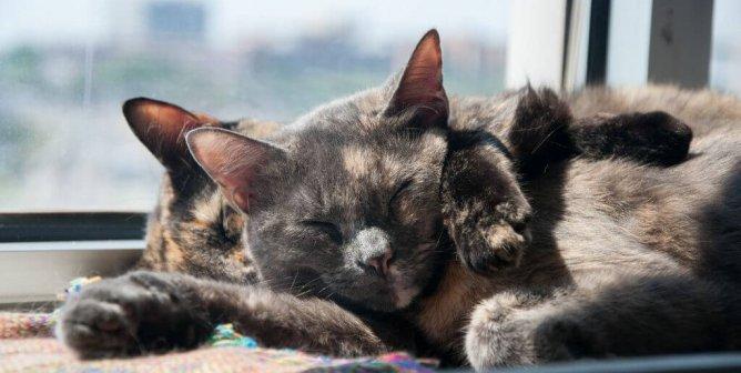 Cat vs. Spouse: Who's the Better Partner?