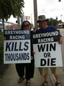 greyhound-racing-wilsons
