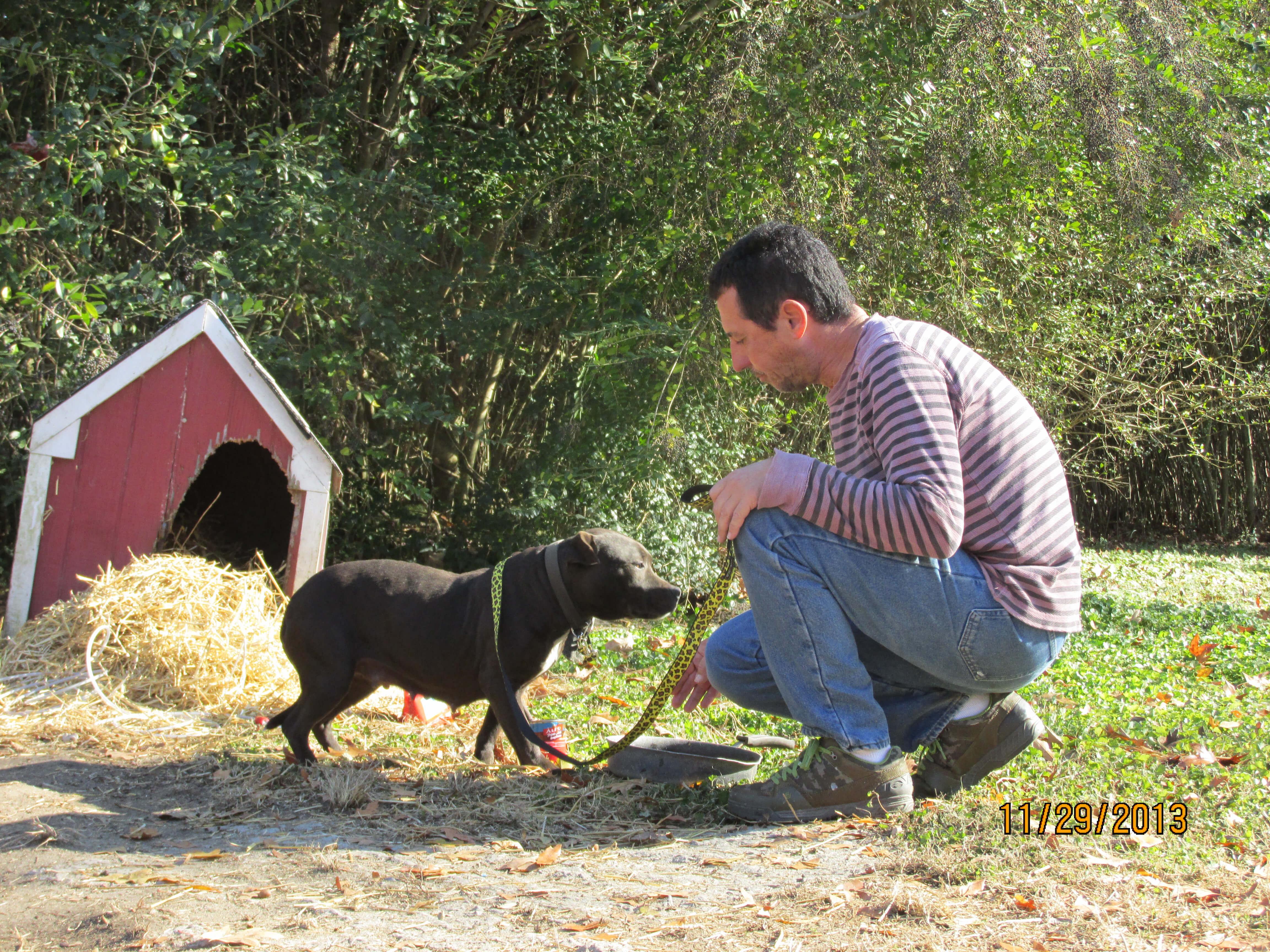 a heartwarming gift for freezing u0027backyard dogs u0027 peta