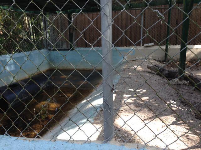 Suncoast Primate Sanctuary Alligator Pit