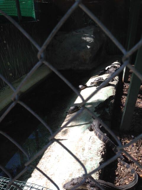 Suncoast Primate Sanctuary Alligator and Turtle Pit