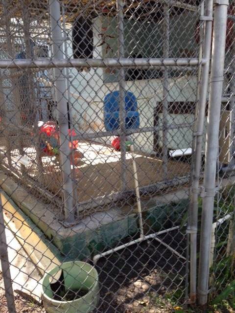 Suncoast Primate Sanctuary Cage with Drinking Pipe