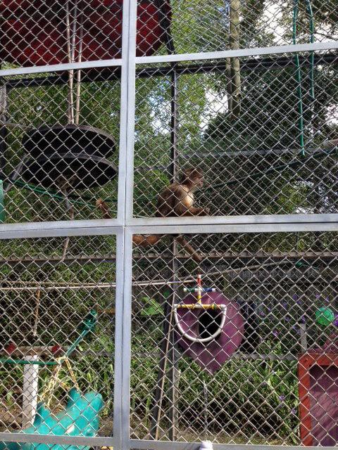 Suncoast Primate Sanctuary Small cage