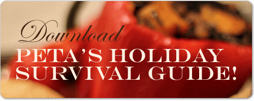 btn-holiday-survival-guide-5