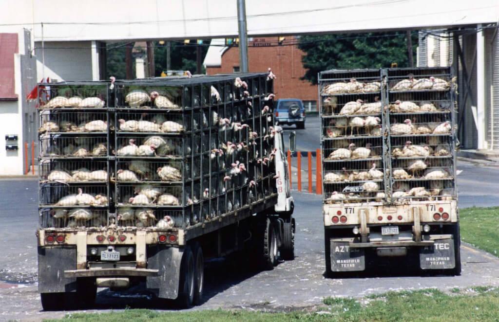 turkey-truck