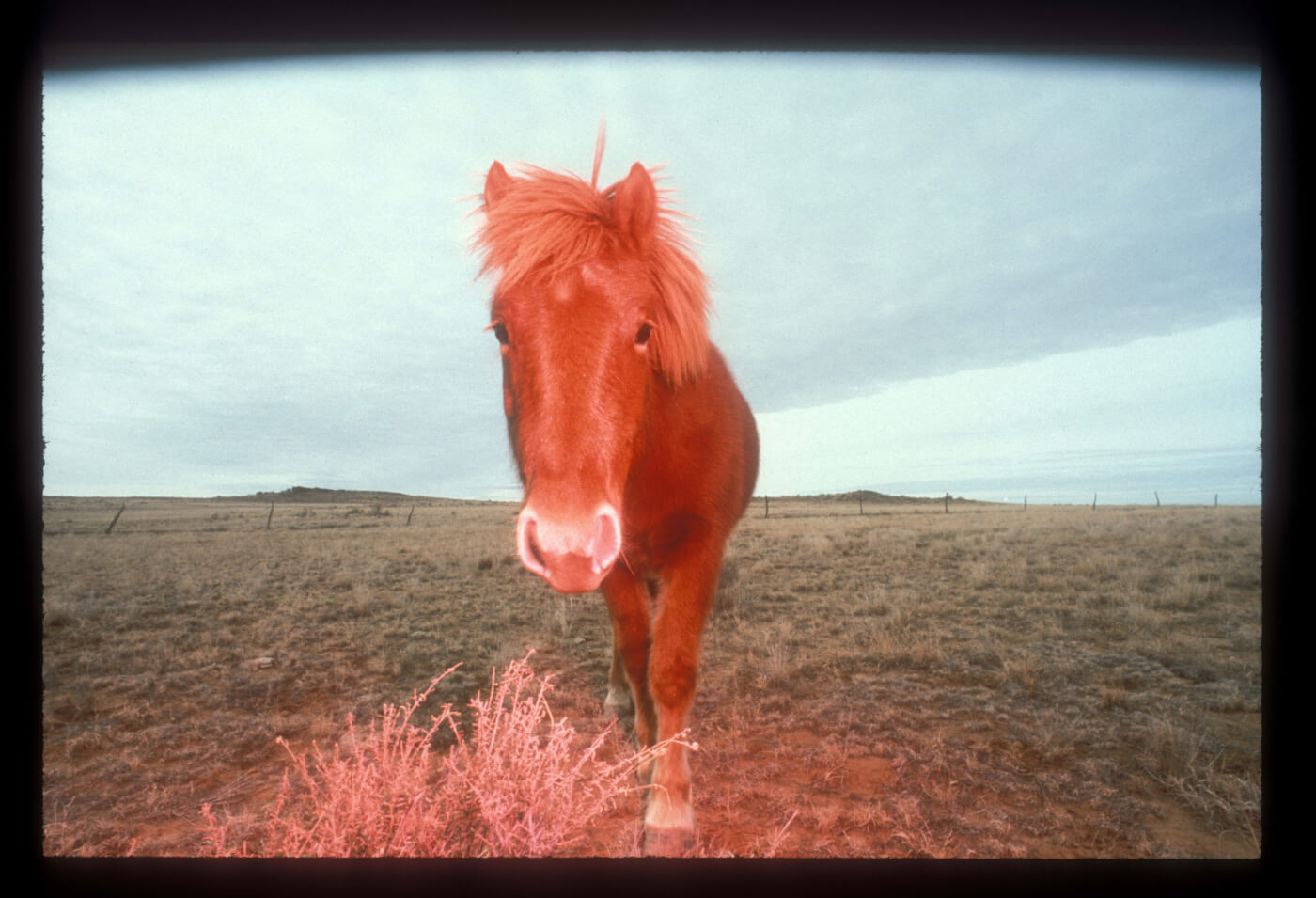 Update: Box Elder County Says NO to Horse Torture!