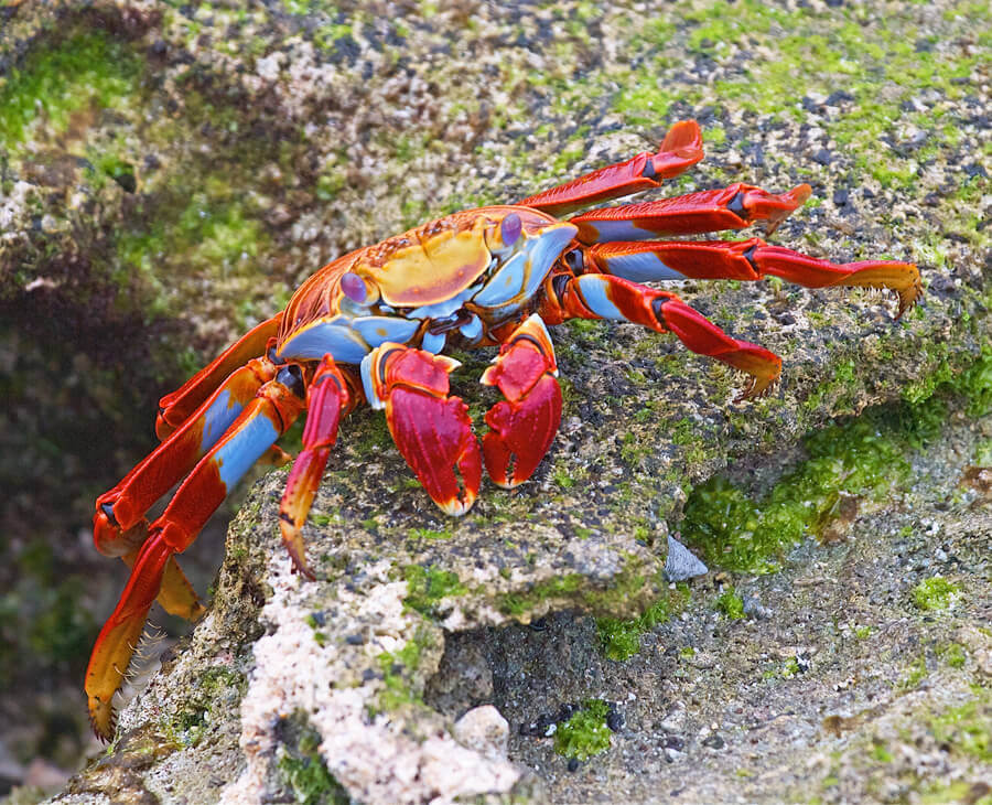 17 Reasons Why Crabs Are Cooler Than You Thought | PETA