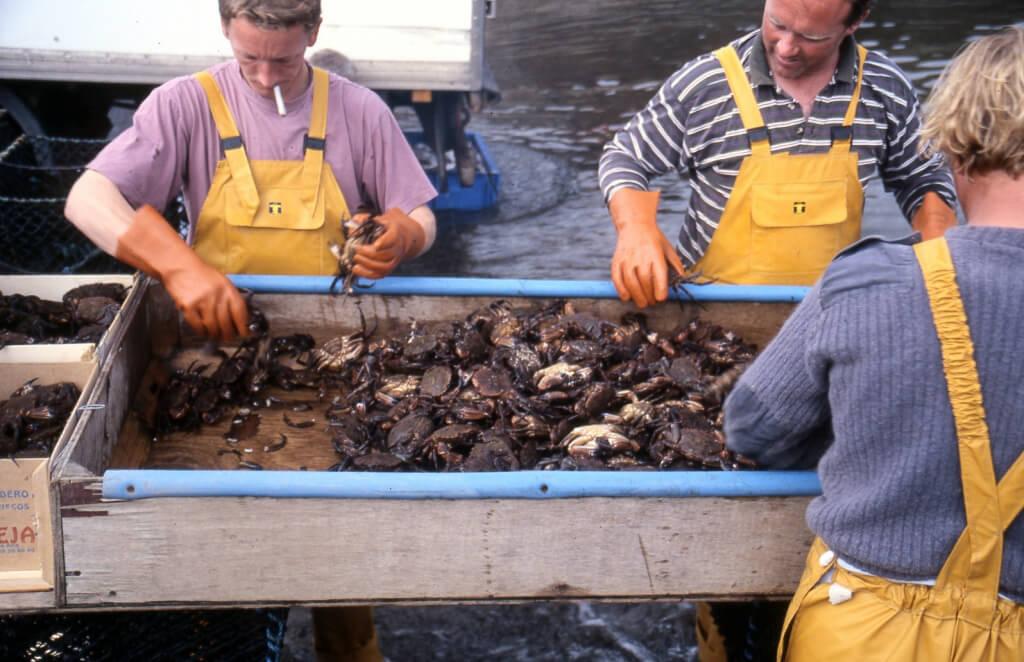 sorting-crab