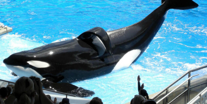 PETA's First-Ever Animal of the Year: Tilikum