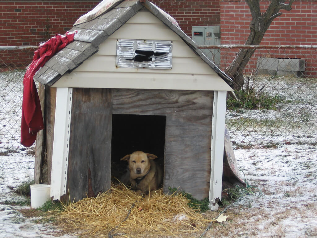 Chained Dog in Dilapidated Doghouse (with new straw from straw delivery)