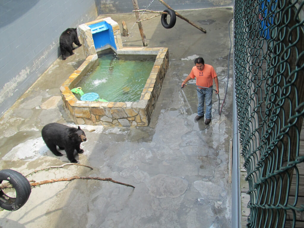 Captive Bears in zoo in Cherokee