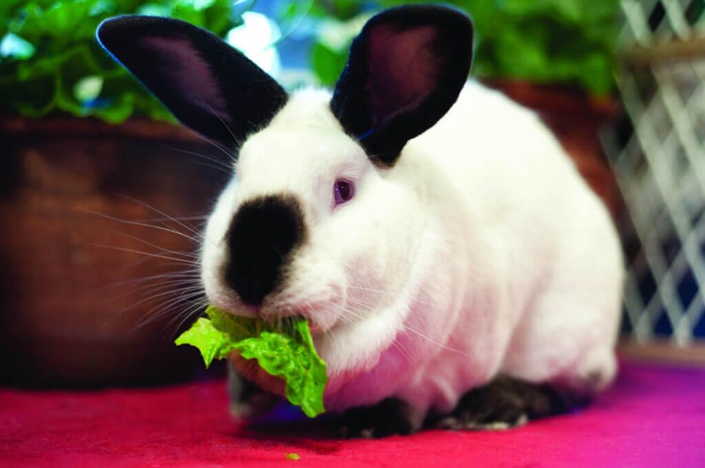 Eddie the Rabbit