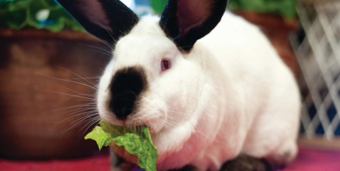 PETA Helps Swedish Organization Save Animals From Chemical Tests