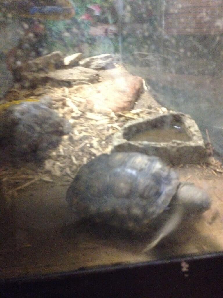 Gopher Turtles