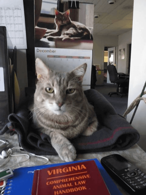Marshall the Cat Studies Law in Norfolk