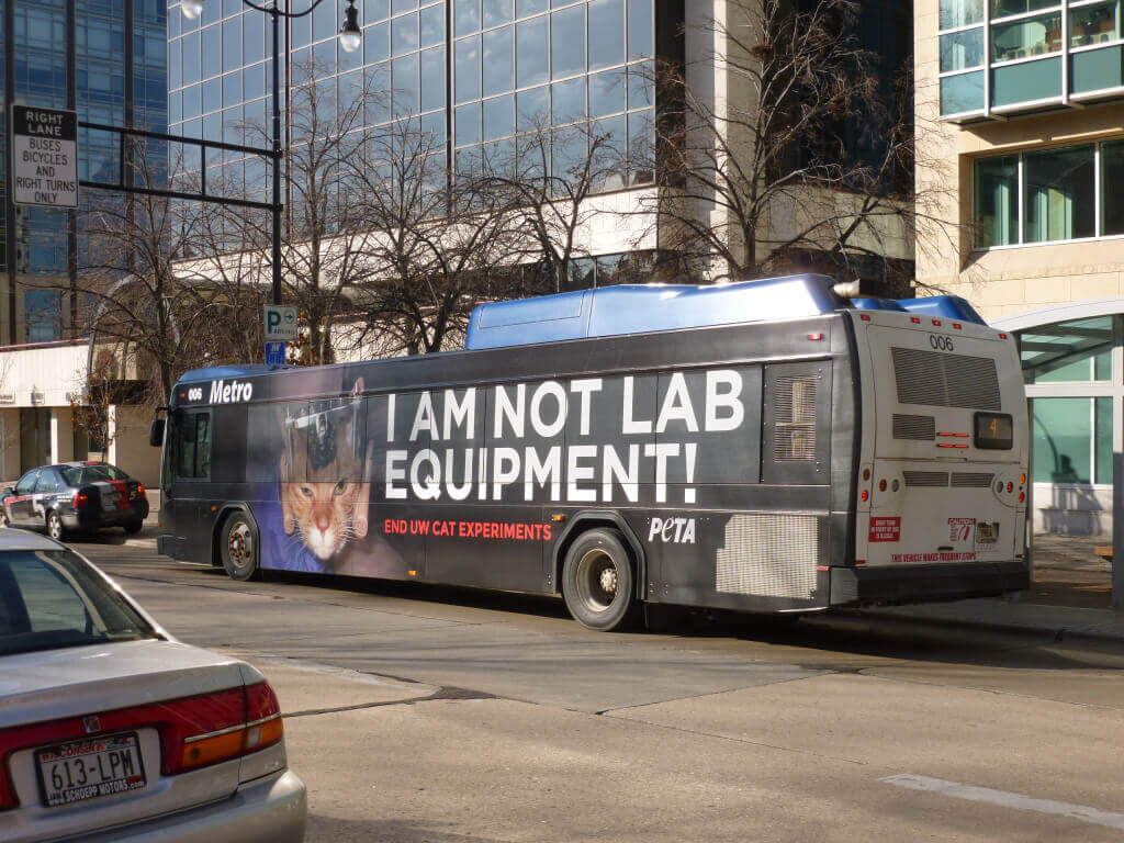 UW Madison Bus Cat Experiment