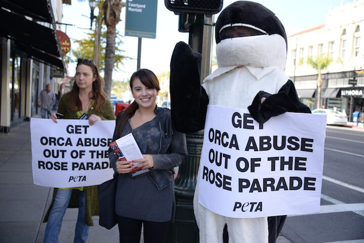 Orca at SeaWorld Protest