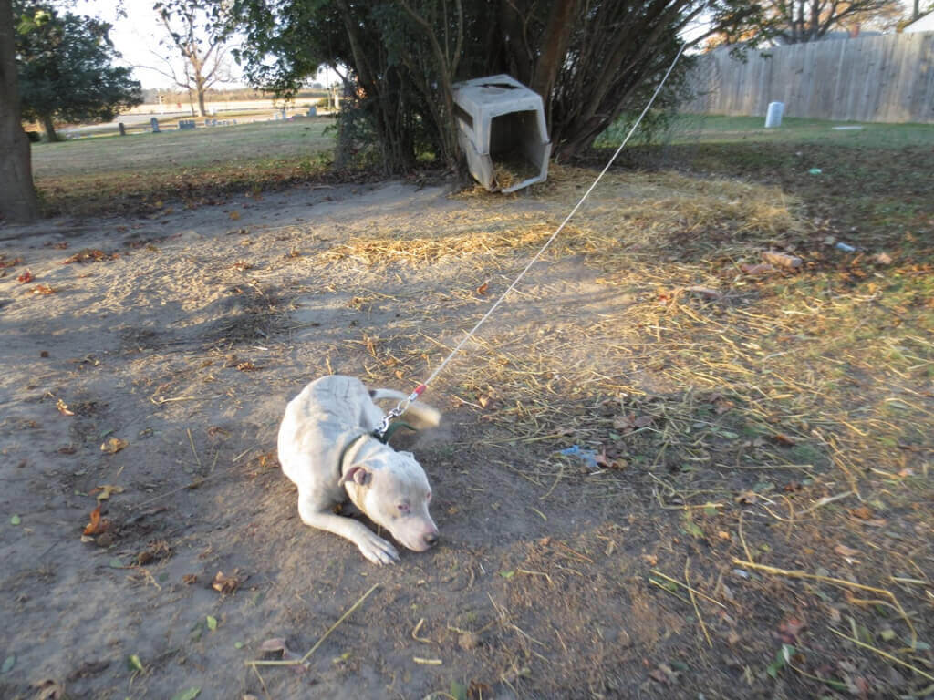 Dog chained in NC