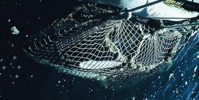 1971 Orca capture off the coast of Washington State (Lolita)