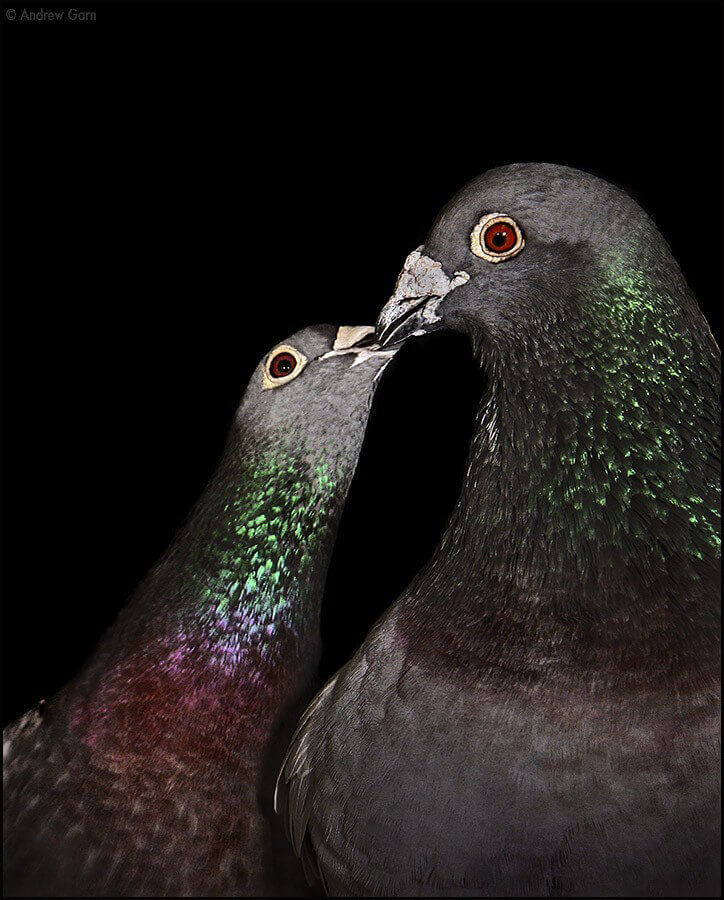 Update: Seabreeze Management Pulls Bird Traps!