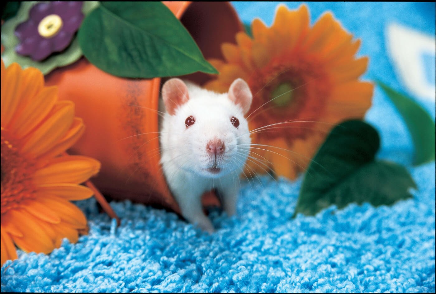 testing cosmetics and household products on animals peta