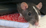 Boy's Death Should Be the End of Petco's Rodent Sales