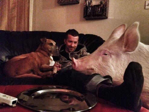 Esther the Pig on the Couch