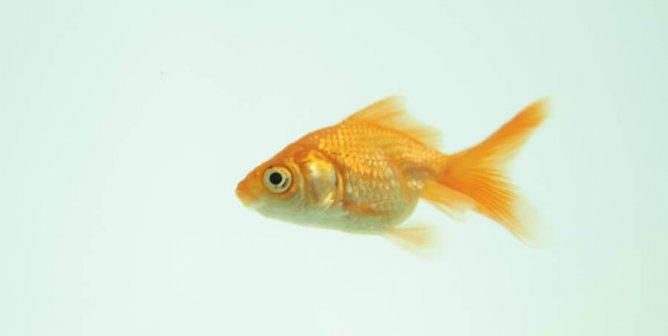 Weird Endangered Fish 2