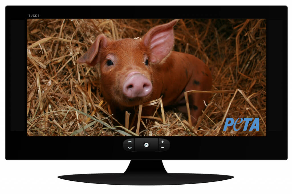 Pig on TV