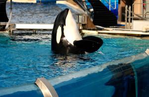 seaworld-tank-orca