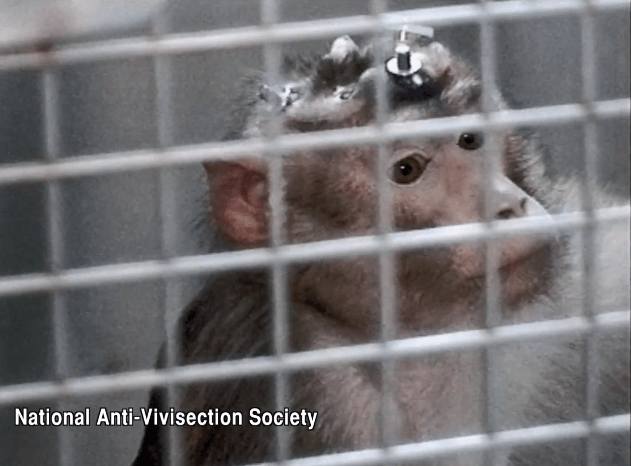 Air France Cruelty to Macaques