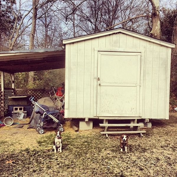 Backyard dog puppies
