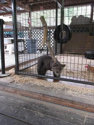 Bear Cub at Cherokee Bear Zoo