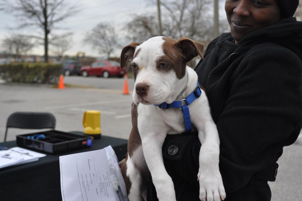 Cute PitBull Puppy Dog PETA Spayathon 2014