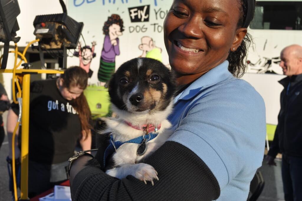 les refuges pour animaux réputés stérilisent et stérilisent les animaux avant de les adopter